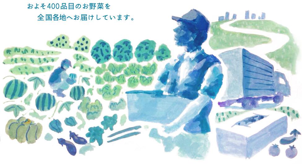 およそ400品目のお野菜を全国各地へお届けしています。